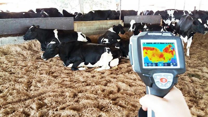 Ventilador para bovinos