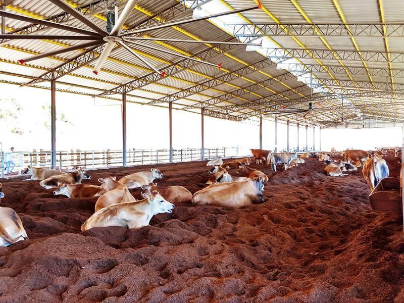 Ventilador para vacas